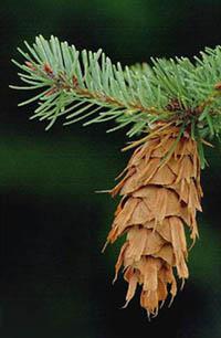 Balkafmetingen hout